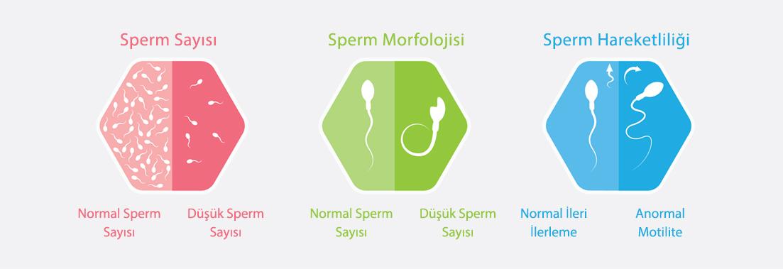 Sperm Analizi Nasıl Yapılır?